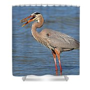 Great Blue Heron Flipping A Shrimp Shower Curtain