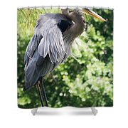 Great Blue Heron IIi Shower Curtain