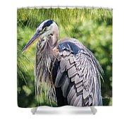 Great Blue Heron Iv Shower Curtain