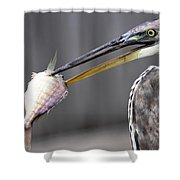 Great Blue Heron - Just Fred Shower Curtain