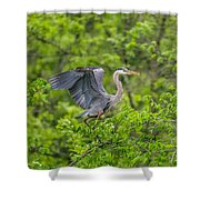 Great Blue Heron Landing Shower Curtain