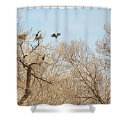 Great Blue Heron Nest Building 1 Shower Curtain
