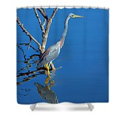 Tricolored Heron Shower Curtain