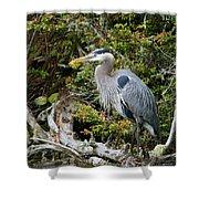 Great Blue Heron On Log Shower Curtain
