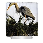Great Blue Heron On Palm Shower Curtain