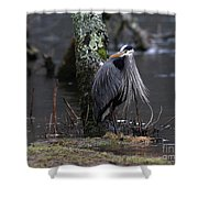 Great Blue Heron On The Clinch River Shower Curtain