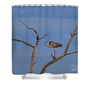 Great Blue Heron Perched On Branch Shower Curtain