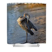 Great Blue Heron Preening On The Beach Shower Curtain