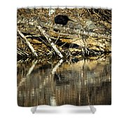 Great Blue Heron Reflection Shower Curtain