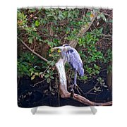 Great Blue Heron Resting Shower Curtain