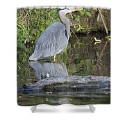 Great Blue Heron Standing In Water Shower Curtain