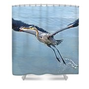 Great Blue Heron Take Off Shower Curtain