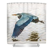 Great Blue Heron Taking Flight Shower Curtain