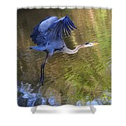 Great Blue Heron Taking Off Shower Curtain