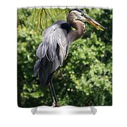 Great Blue Heron Vii Shower Curtain