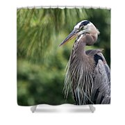 Great Blue Heron Viii Shower Curtain