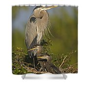 Great Blue Heron With Chicks Florida Shower Curtain