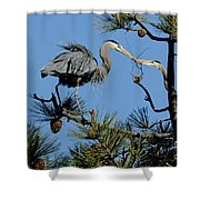 Great Blue Heron With Nest Material Shower Curtain