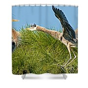 Great Blue Herons Shower Curtain