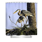 Great Blue Herons Nesting Shower Curtain