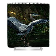 Great Blue Herron Shower Curtain