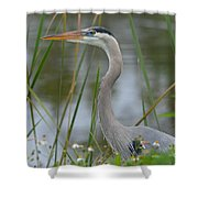 Great Blue In The Reeds Shower Curtain