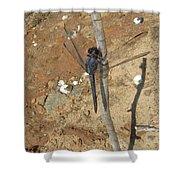 Slaty Skimmer Dragonfly Shadow Shower Curtain