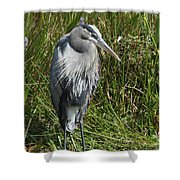 Great Blue Waiting For Prey Shower Curtain