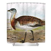 Great Bustard Shower Curtain