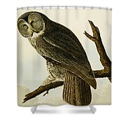 Great Cinereous Owl Shower Curtain