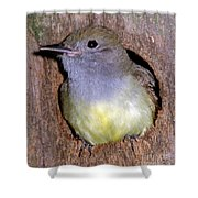 Great Crested Flycatcher In Nest Cavity Shower Curtain
