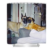Great Dane And Australian Shepardd Shower Curtain