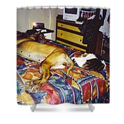 Great Dane And Cat Shower Curtain