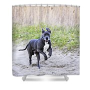 Great Dane Shower Curtain