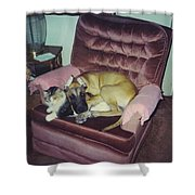 Great Dane Pup And Cat Shower Curtain