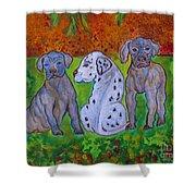 Great Dane Pups Shower Curtain