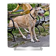 Great Dane Sitting On Park Bench Shower Curtain