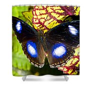 Great Eggfly Butterfly Shower Curtain