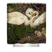 Great Egret 2am-7177 Shower Curtain