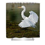 Great Egret Alighting Shower Curtain