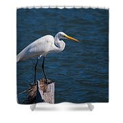 Great Egret At His Post Shower Curtain