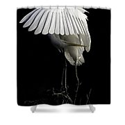 Great Egret Bowing Shower Curtain