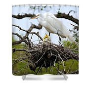 Great Egret Chicks - Sibling Rivalry Shower Curtain by Carol Groenen