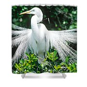 Great Egret Displaying Breeding Plumage Shower Curtain