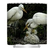 Great Egret Family 2 Shower Curtain