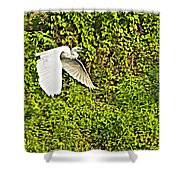 Great Egret Flying Over Rapti River In Chitwan Np-nepal Shower Curtain