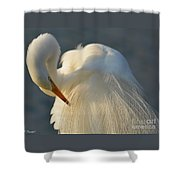 Great Egret Grooming Shower Curtain