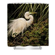 Great Egret In Breeding Plumage Shower Curtain