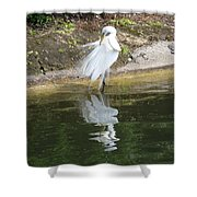 Great Egret In The Lake Shower Curtain