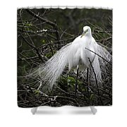 Great Egret In Tree Shower Curtain
